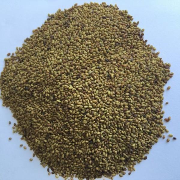 Семена за покълване алфа-алфа, 50 гр.