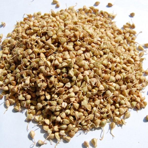 Сушени кълнове от елда - натурална, 90 гр.